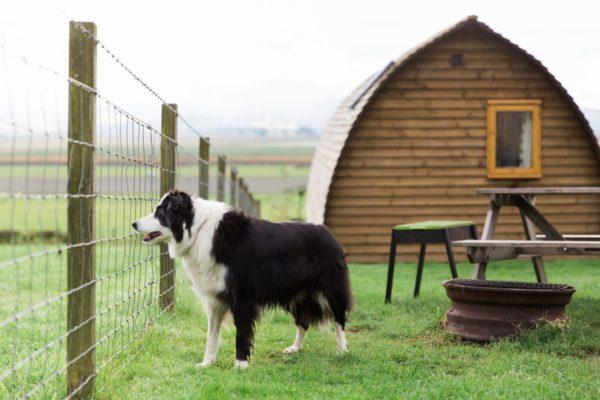 DOG FRIENDLY GLAMPING UK