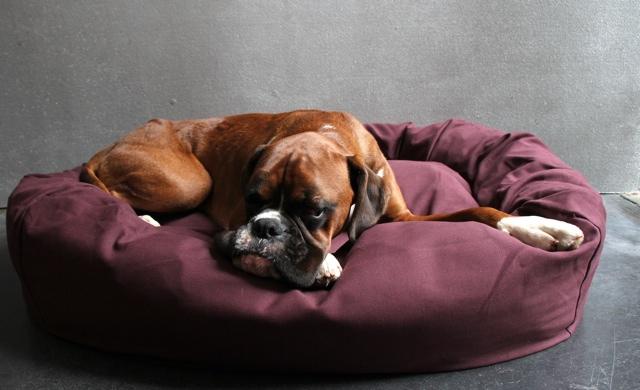 Bone & Rag designer donut dog bed