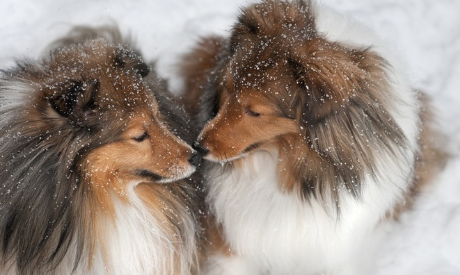 cute dogs in the snow