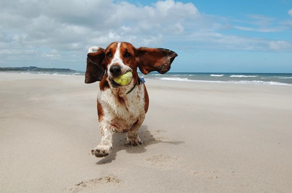 win a dog friendly holiday