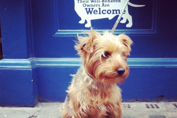 pipsdish dog friendly restaurant london
