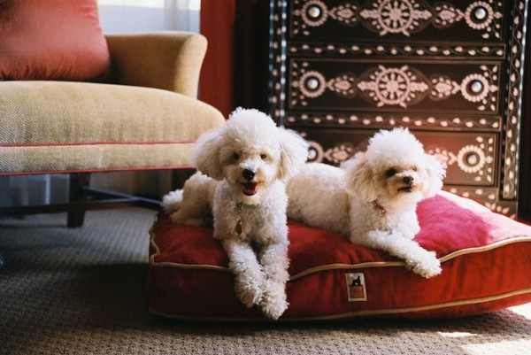 win a pet friendly holiday