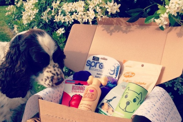 PawPost monthly subscription box for dogs and cats