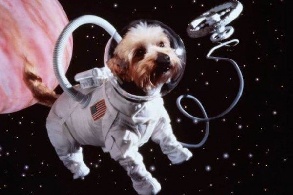 Celestis Pets sends departed pets into space