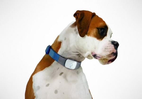 Tagg Dog Tracker