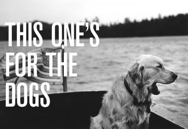shinola bruce weber dog collection