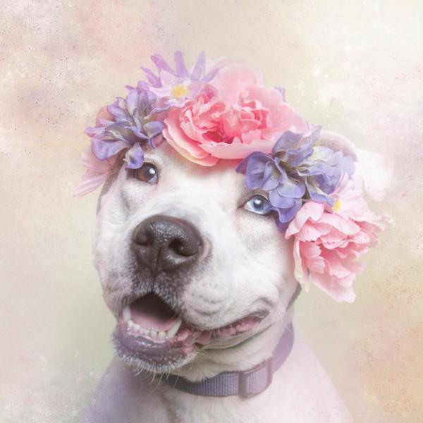 Flower Power Pit bulls Sophie Gamand