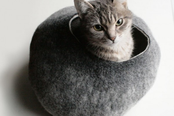 vaiva nat grey cat cave