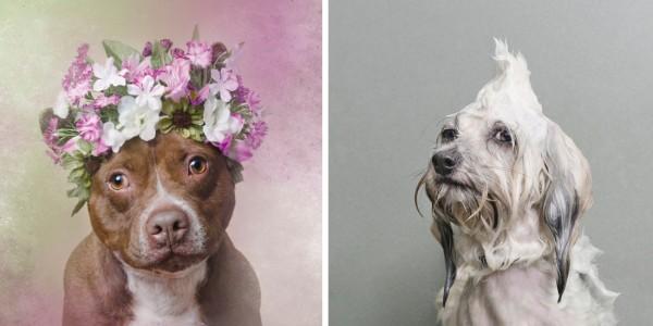 sophie gamand dog photography
