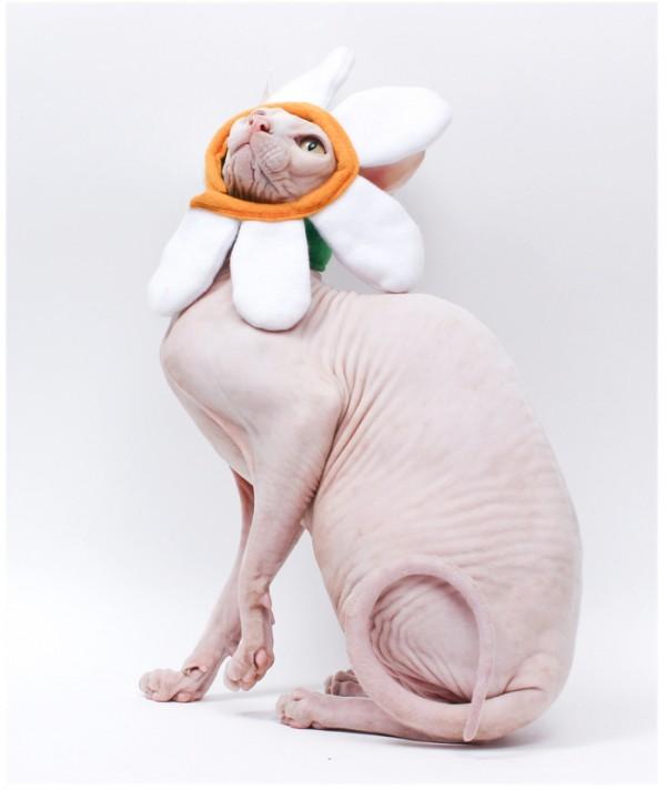 Daisy Flower Cat Halloween Costume