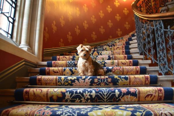 George at the pet friendly st pancras renaissance hotel