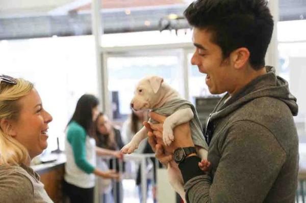 LA Dog Cafe Pup Up