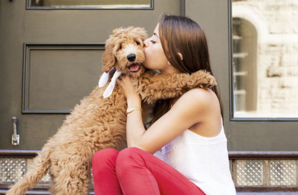how to become a successful pet sitter