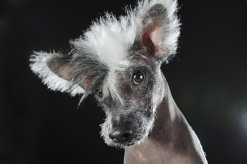 Prophecy Hairless Dogs by Sophie Gamand Photography