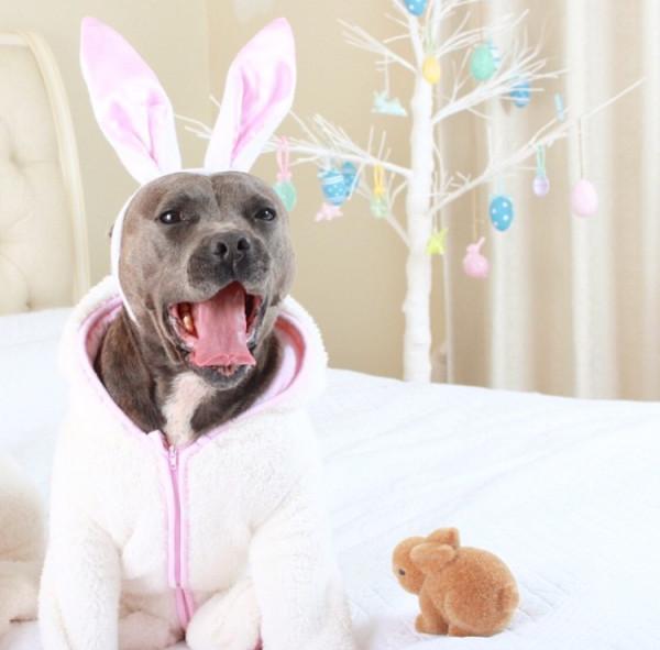 blue boys cute easter bunny dog
