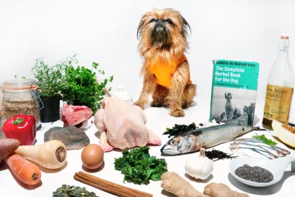 Curious Canine Kitchen pop up holistic dog restaurant london