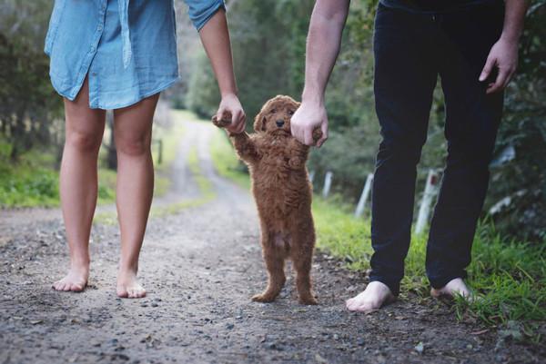Elisha Minette Newborn Shoot Puppy Humphry