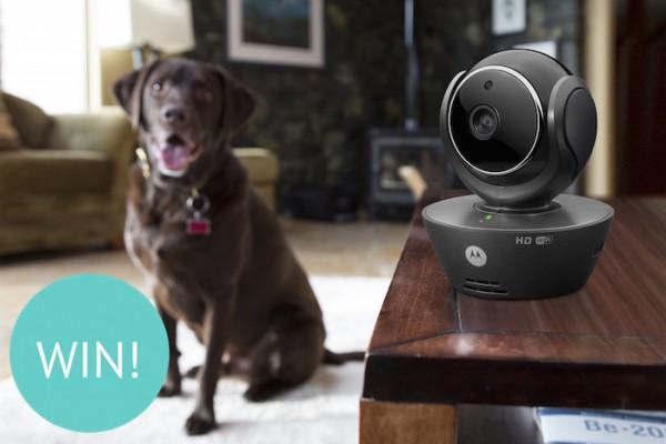 win a Motorola Scout 85 Pet Monitor