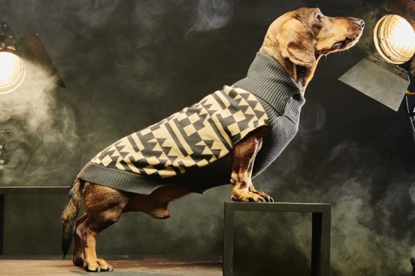 pepito and co dog sweater