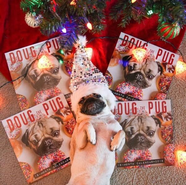 famous instagram dogs christmas doug the pug