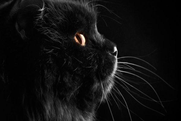 cat superstitions