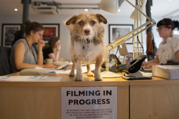 Bring Your Dog to Work Day - Ridley Scott RSA Films
