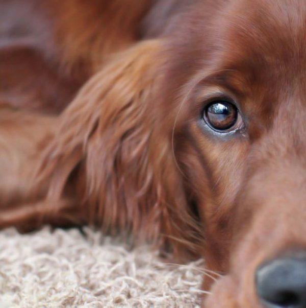 animal communication and healing