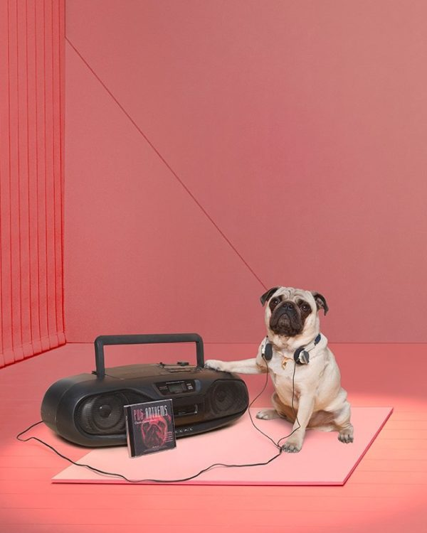 deezer dog playlist