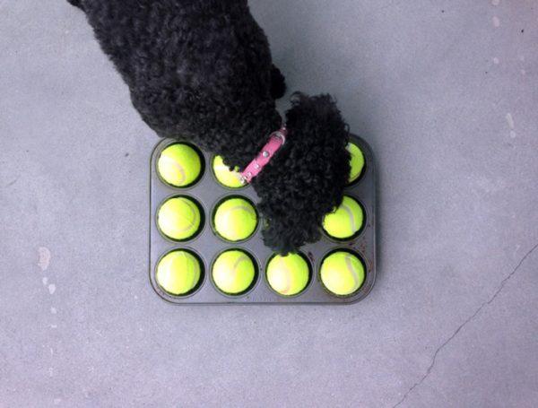 dog muffin tin tennis ball game