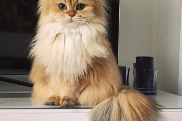 smoothie the cat instagram