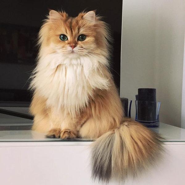 smoothie the cat instagram