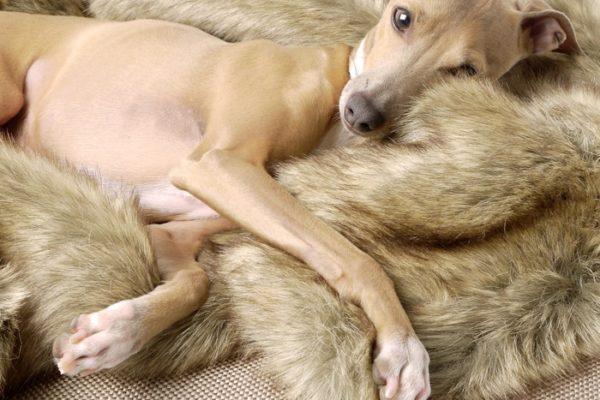 charley chau luxury dog blanket