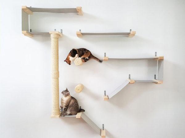 thunderdome cat activity centre