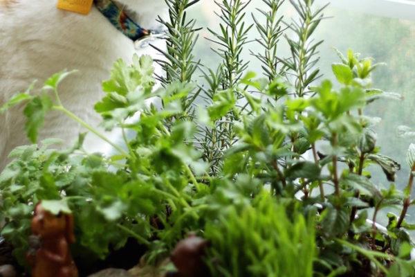 how to make your own indoor cat garden