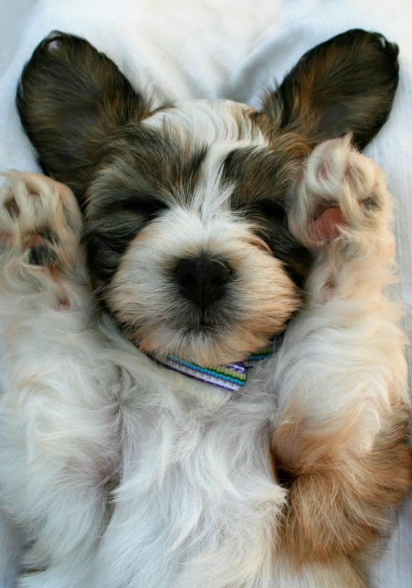 5 COMMON MISTAKES FOR NEW PUPPY OWNERS