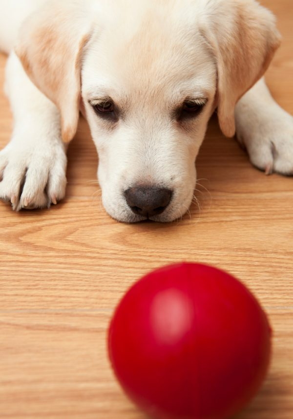 5 OF THE BEST PUPPY TRAINING GAMES
