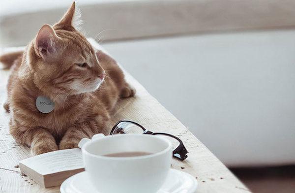 Tabcat cat tracker