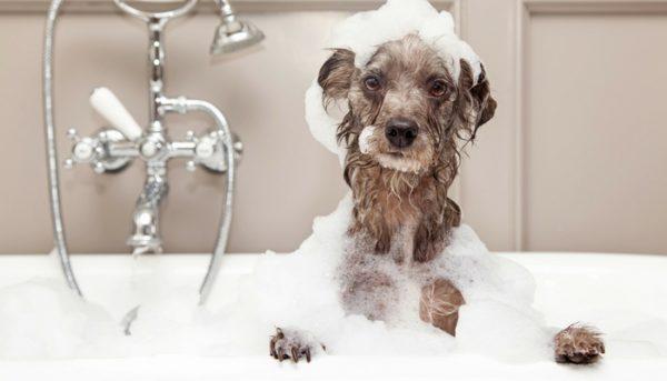 UK's best dog grooming spas