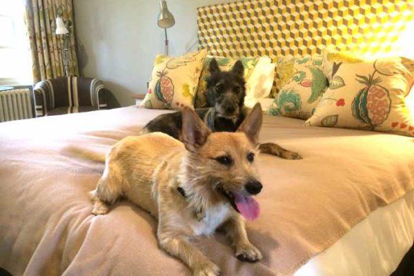 crown and castle luxury dog friendly hotel suffolk
