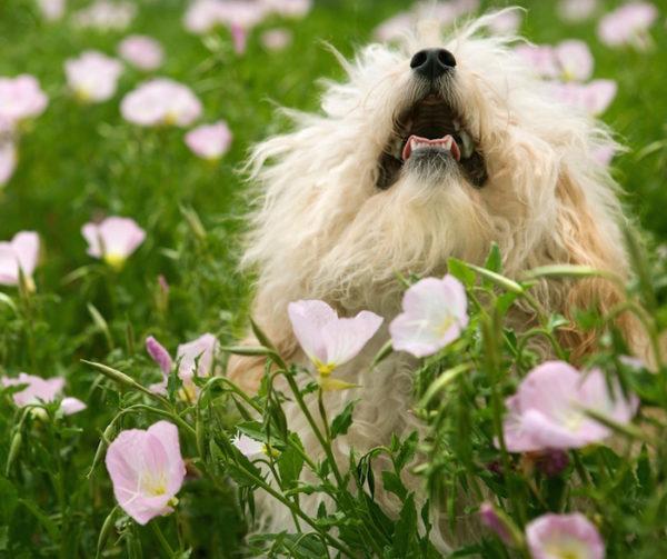 uk best dog friendly public gardens