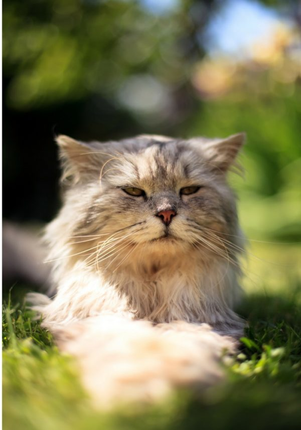 how to keep cats cool in summer