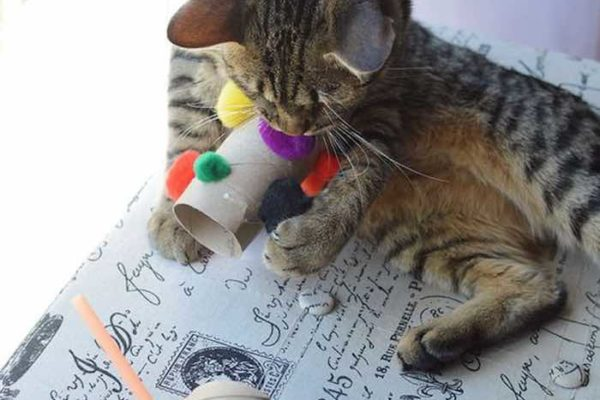 DIY TOILET ROLL CAT TOYS