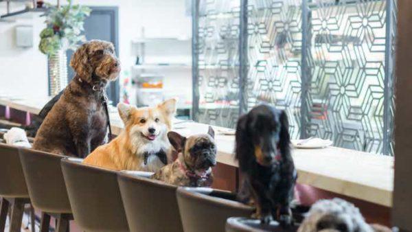 m victoria dog friendly restaurant