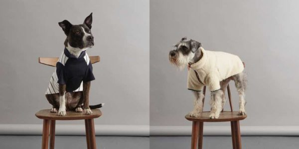 designer dog coats and sweaters