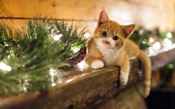 christmas dinner ideas for pets