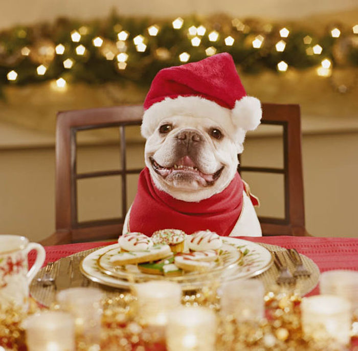 Practically Living: Christmas Vacation Dinner Kit White ... |Christmas Vacation Dog Dinner
