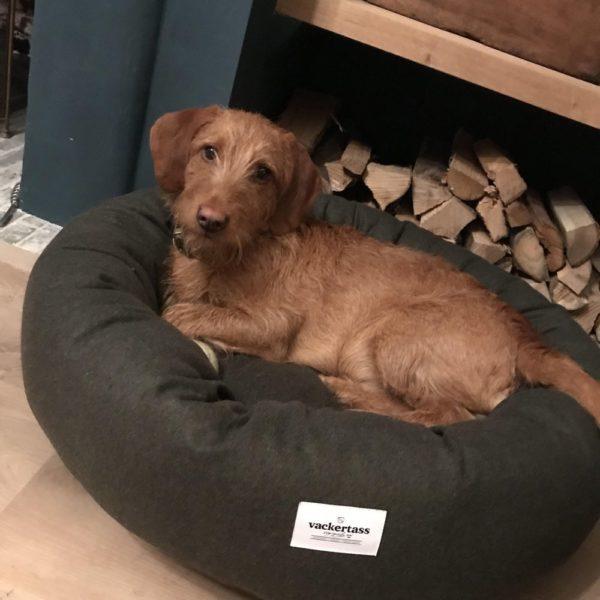 Wool Donut Dog bed Vackertass