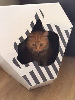 MIA Cat House MyKotty