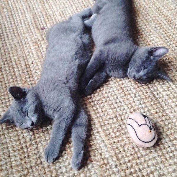 cheshire wain flamingo cat toy