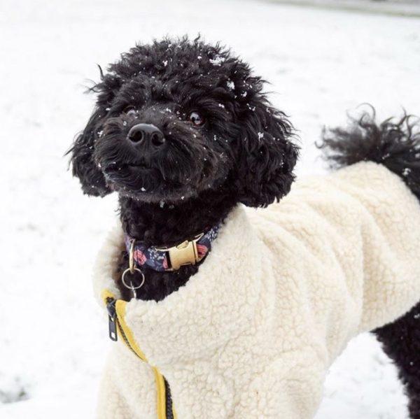 fetch follow dog fleece jacket